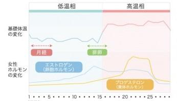 女性のサイクル低温期と高温期の説明図